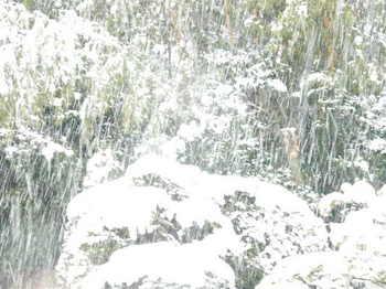 25日の雪の状況